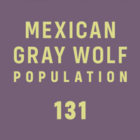Mexican gray wolf population - 131
