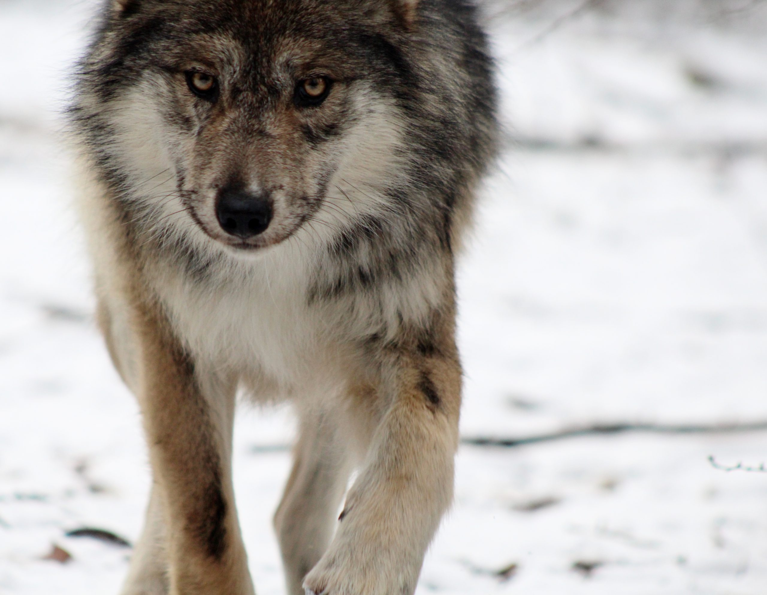 It's time to end trapping in New Mexico